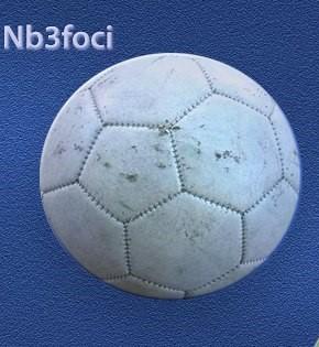 NB3 Foci weboldal